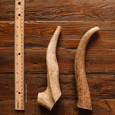 2-Pack Medium Whole Elk Antler Dog Chews