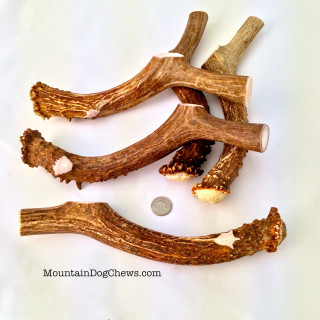 Mule Deer Antler Chews from Mountain Dog!  100% All-Natural Fun, Scrumptious and addictive Chewing!