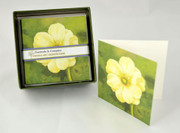 Anemone on Green Boxed Gift Enclosures