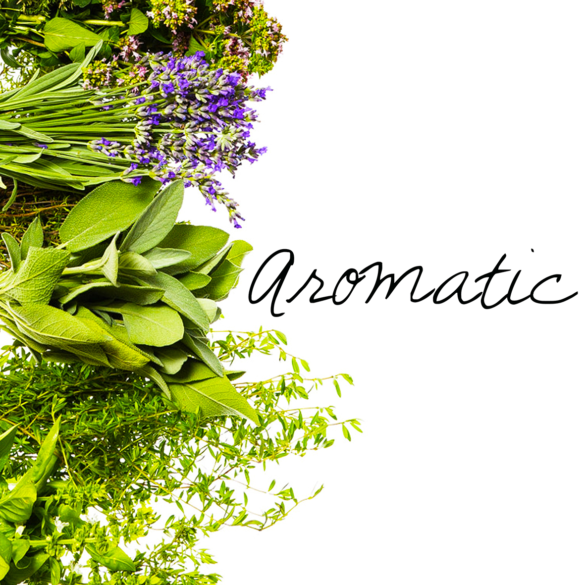 f-aromatic.jpg