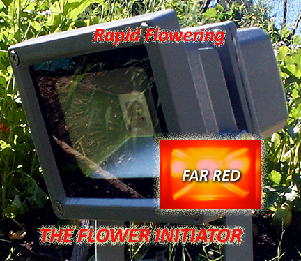 Buy-the-Flower-Initiator!