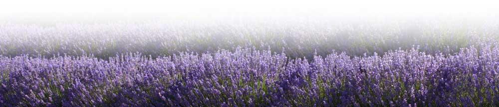 lavenderfooter.jpg