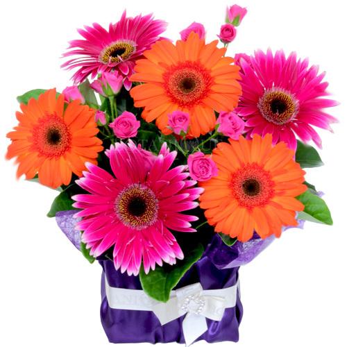 Hospital Florists Gold Coast Send Flowers Gold Coast Hospital