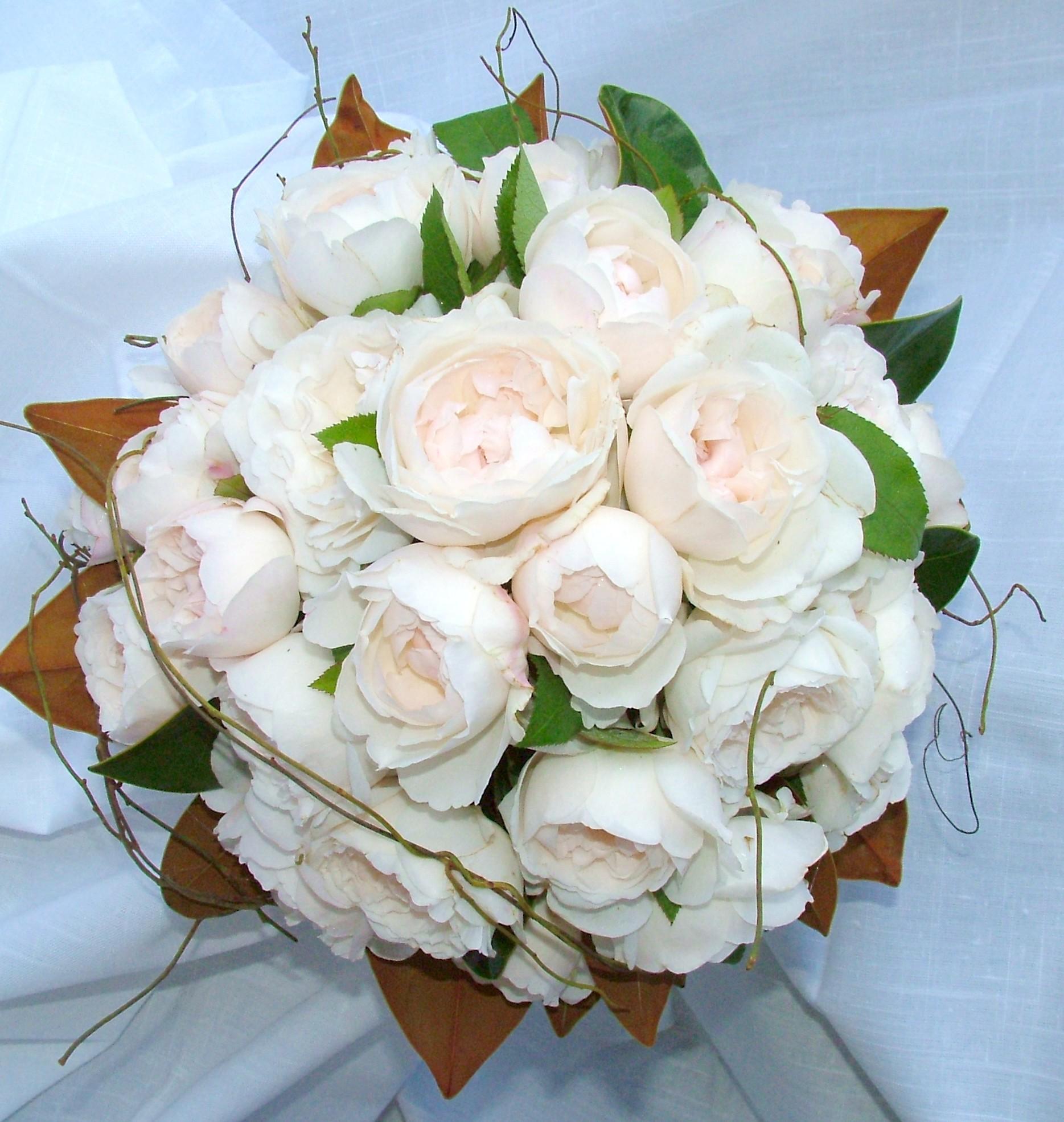 david-austin-roses-blush-pink.jpg