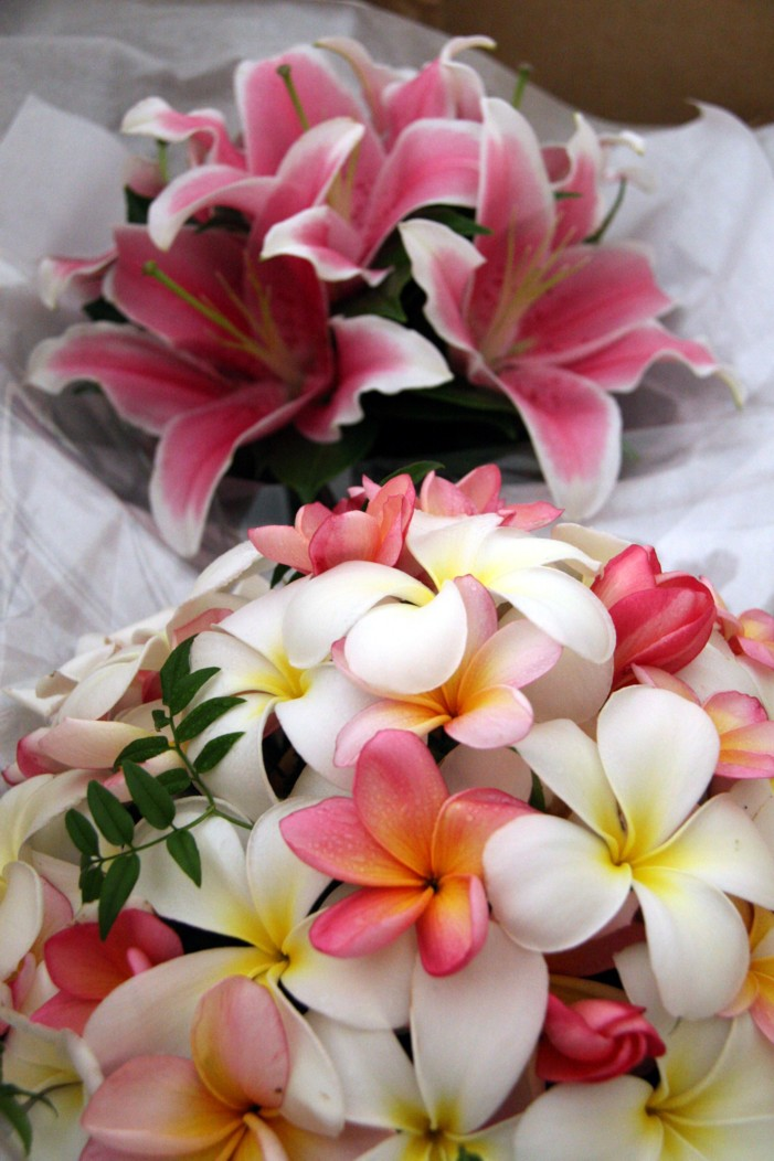 frangipani-pink-and-yellow-import2.jpg