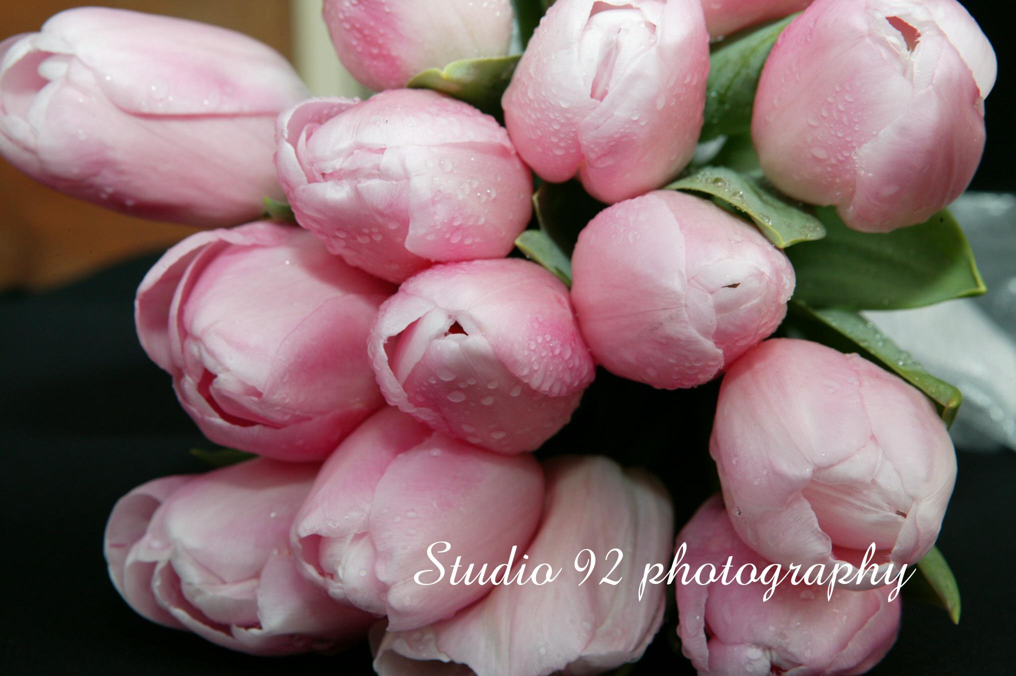 pink-tulips-september-2005-003.jpg