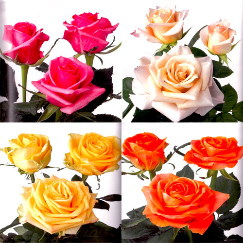 roses-for-online-wedding-flower-packages-gold-coast-florist.jpg
