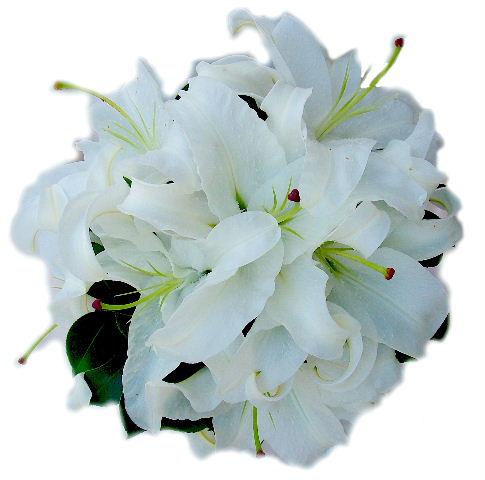 white-oriental-lilies.jpg