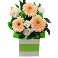 Spring Time flower arrangement of gerbera Gold Coast Delivery - Botanique