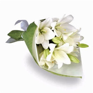 Asiatic Lily White