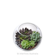 Succulent Terrarium in glass fish bowl - Botanique