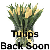 Tulips Coming Back Soon