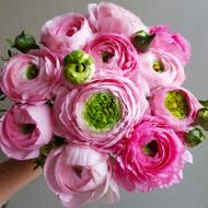 MARKET SPECIAL - Ranunculus Bouquet