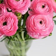 MARKET SPECIAL - Ranunculus Bouquet in Vase
