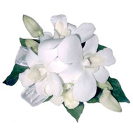 White Dendrobium orchid corsage suitable for wrist or shoulder or handbag