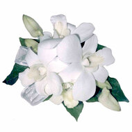 White Dendrobium orchid corsage suitable for wrist or shoulder or handbag