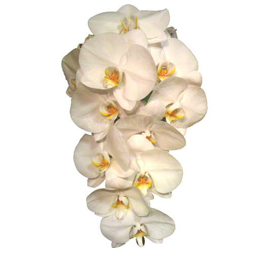 White Phalaenopsis orchid trailing bouquet, 10 blooms