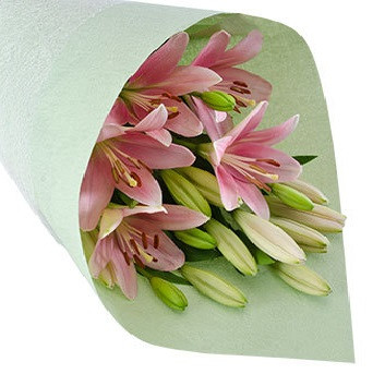 Pink Asiatic Lily Special