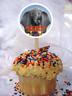 Dumbo cupcake topper