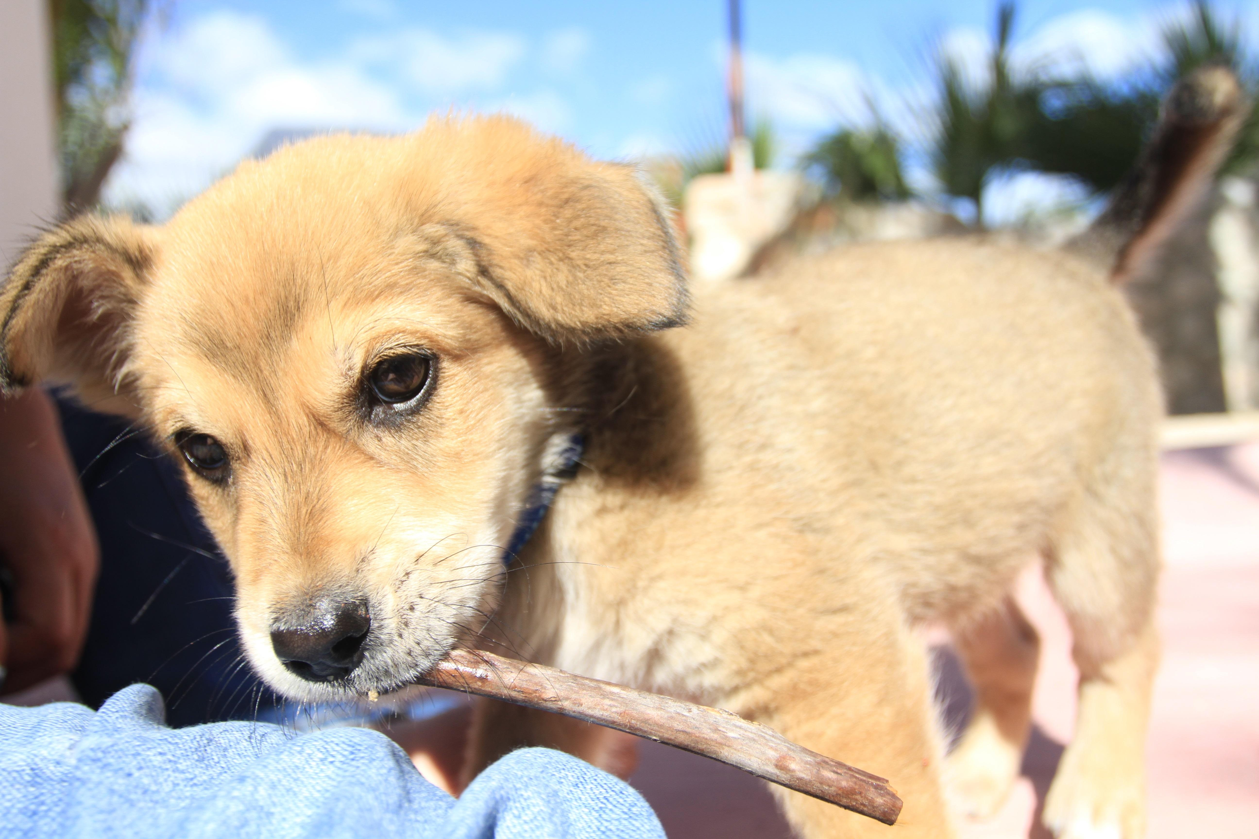 Bandito the Baja perro