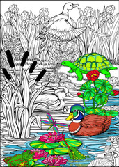 Duck Pond - 10x14 Coloring Poster