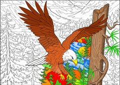 Soaring Bald Eagle - 10x14 Coloring Poster