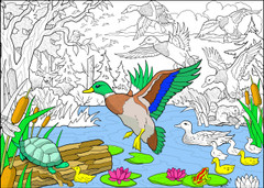 Wild Ducks - 10x14 Coloring Poster