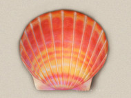Coral Color Shell Water Scattering Urn
