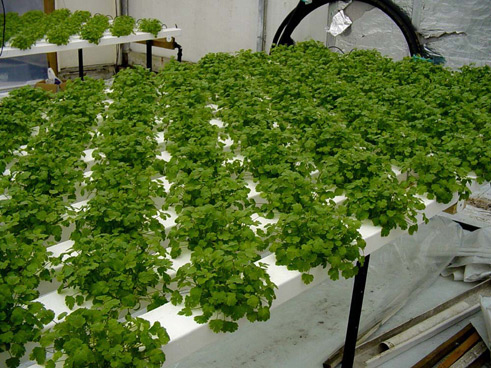 Hydroponic Systems 101 Learn The Basics Of Hydroponics