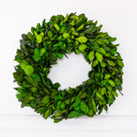 """17"""" wreath preserved (LARGE BOXWOOD LEAF) green (Indoor Use Only)"""