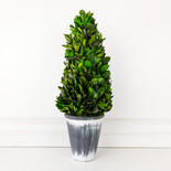 "21"" tower preserved (LARGE BOXWOOD LEAF) green (Indoor Use Only)"