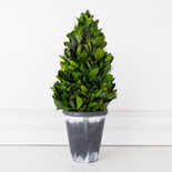 "16.5"" tower preserved (LARGE BOXWOOD LEAF) green (Indoor Use Only)"