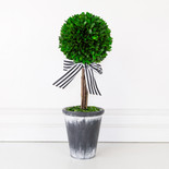 "16.5"" preserved (BOXWOOD TOPIARY) green (Indoor Use Only)"