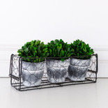 "10.5"" x 5.5"" x  3.5"" set of 3 pots/holder (BOXWOOD) green (Indoor Use Only)"