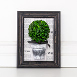 "7.5"" x 9.5"" x 2.5"" frame  (BOXWOOD TOPIARY) green/black - (Indoor Use Only)"