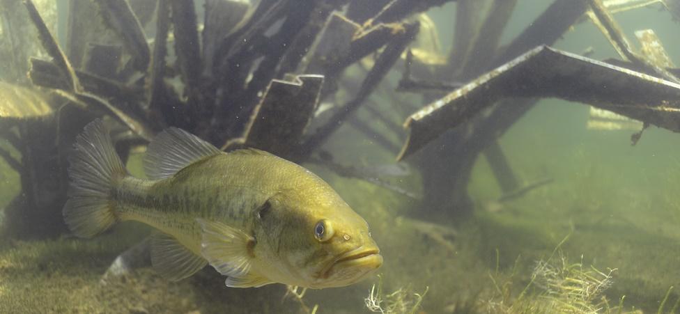 Fishiding artificial fish habitat structures for Artificial fish habitat