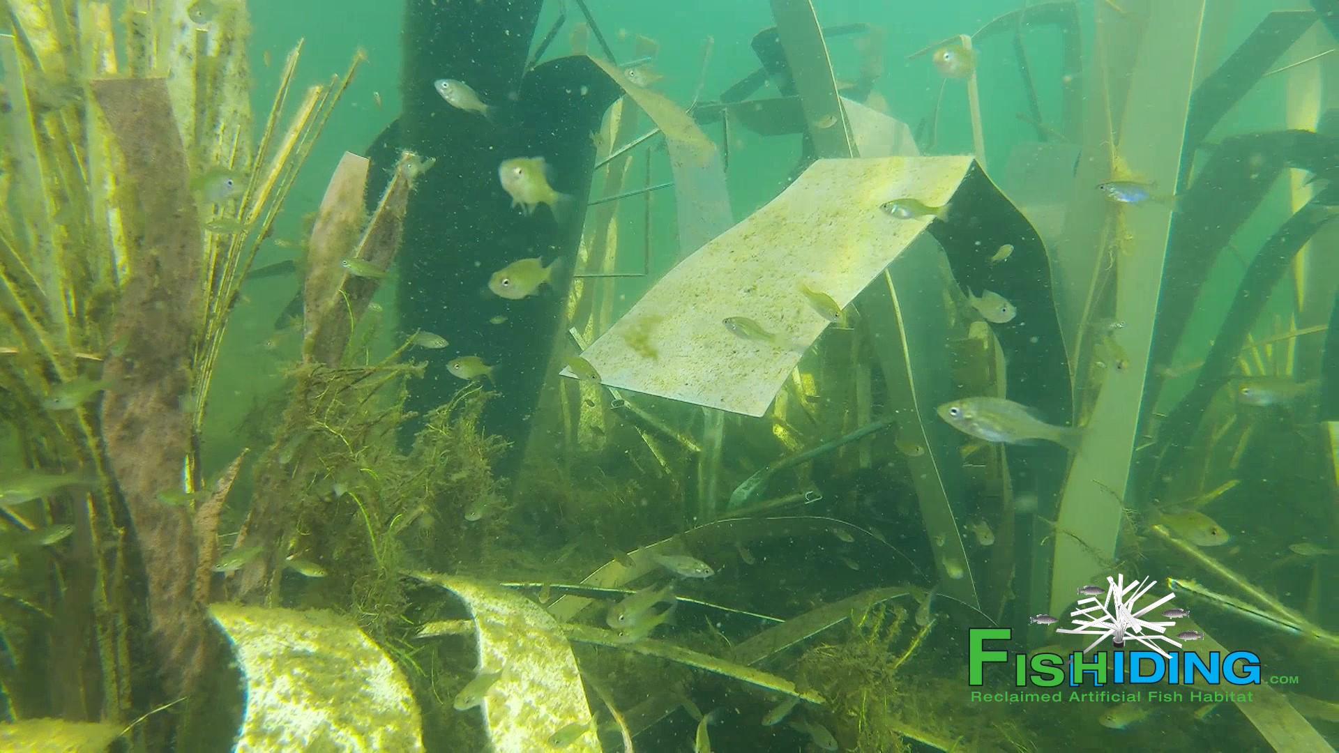 Fishiding grouping