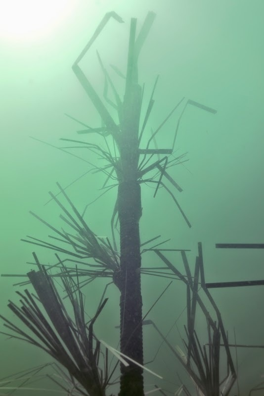 fishiding-12.0-HighRise habitat