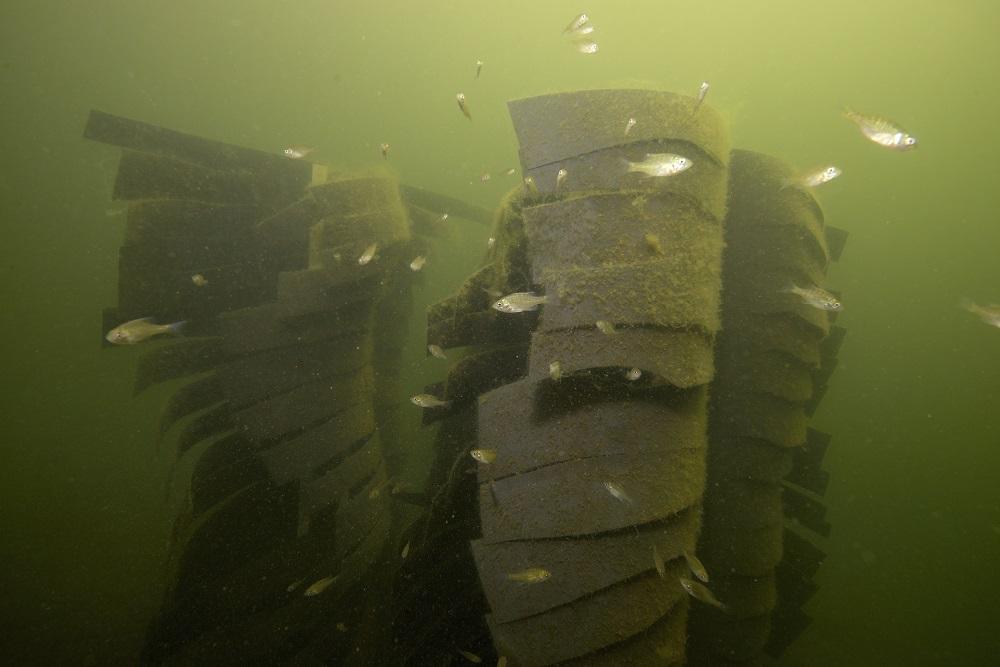 Fishadow habitat