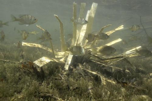 fishiding-shallow-habitat-