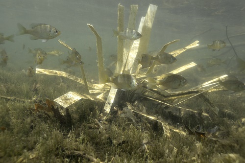 Shallow Water Fry And Forage Fish Habitat Made From