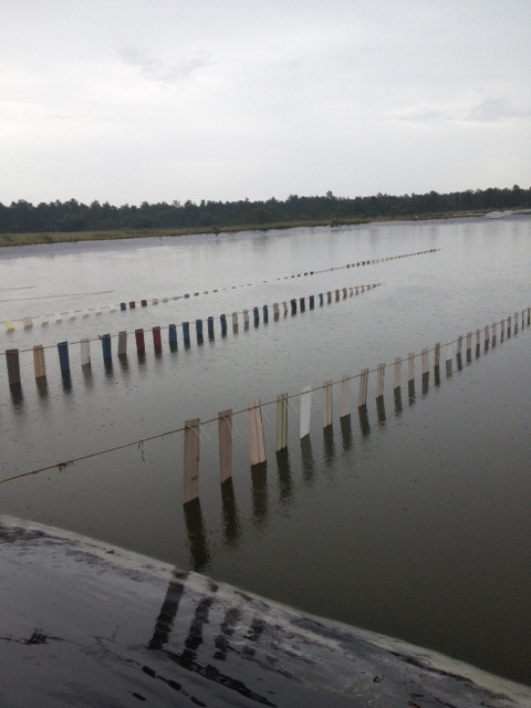 Shrimp farming with fishiding artificial fish habitat