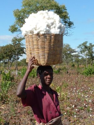 organic_cotton_farmer.jpg