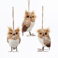 Kurt Adler Owl Ornament, 3 Assorted #C2298