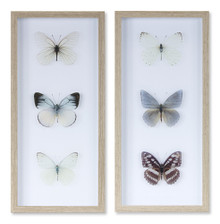 Set of 2 Framed Butterfly Print