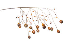 Set of 6 Orange Pod and Berry Branch Pick