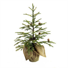 This 24-in Angel Fir Tree from Kurt Adler is a beautiful and festive addition to any holiday decoration. Perfect for decorating when space is limited, this tree has a realistic look that is pre-decorated with pinecones and is pre-lit with 58 white LED lights. Its burlap bag base lends a rustic touch.