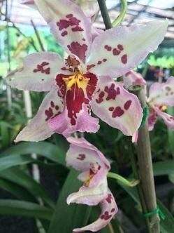 orchid4d.jpg