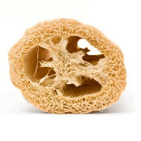 Buy Luffa /  Loofah (7/8 inch) pieces
