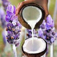 Pure Coconut Milk Lavender Fragrance Oil